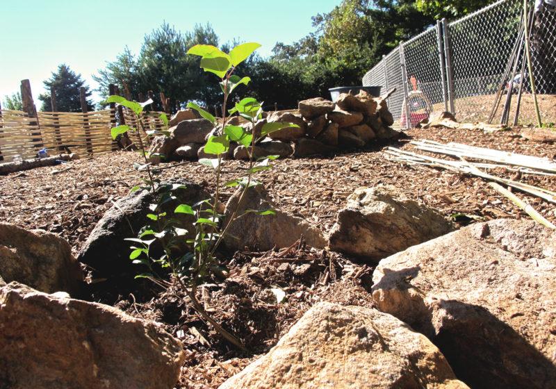 Shiloh Community Garden