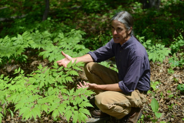 Yale University alumnus Dave Ellum is Warren Wilson College's professor of ecological forestry and director of the College Forest.