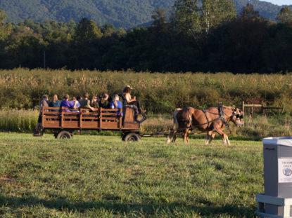 BBQ Horse ride