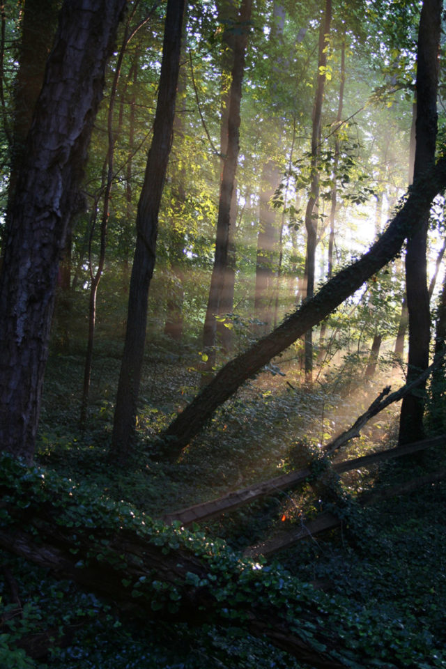 The Warren Wilson College Forest
