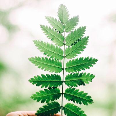 Leaf - Tree
