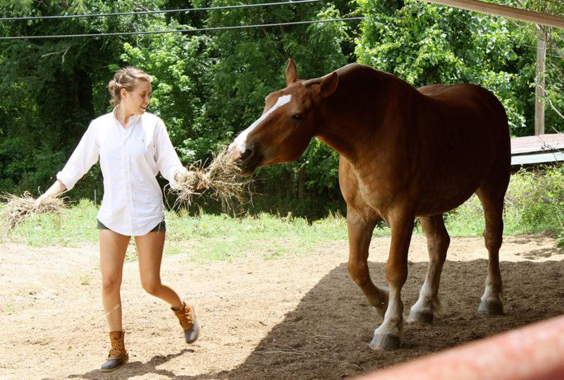 Horse Crew