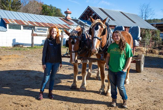 New draft horses at Warren Wilson College